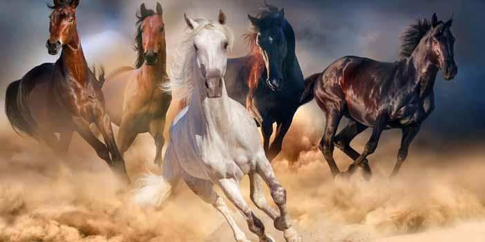 How Fast Can Arabian Horse Run