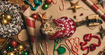 What Kinds of Ornaments Are Available For The Cat