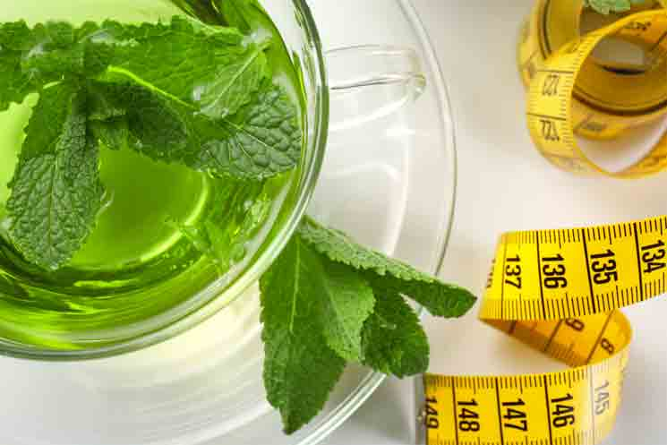 All You Need To Know About Using Mint for Weight Loss