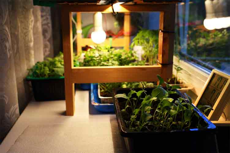 Functions of a Grow Light Ballast